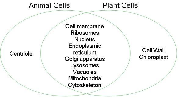 Plant And Animal Cells Venn Diagram