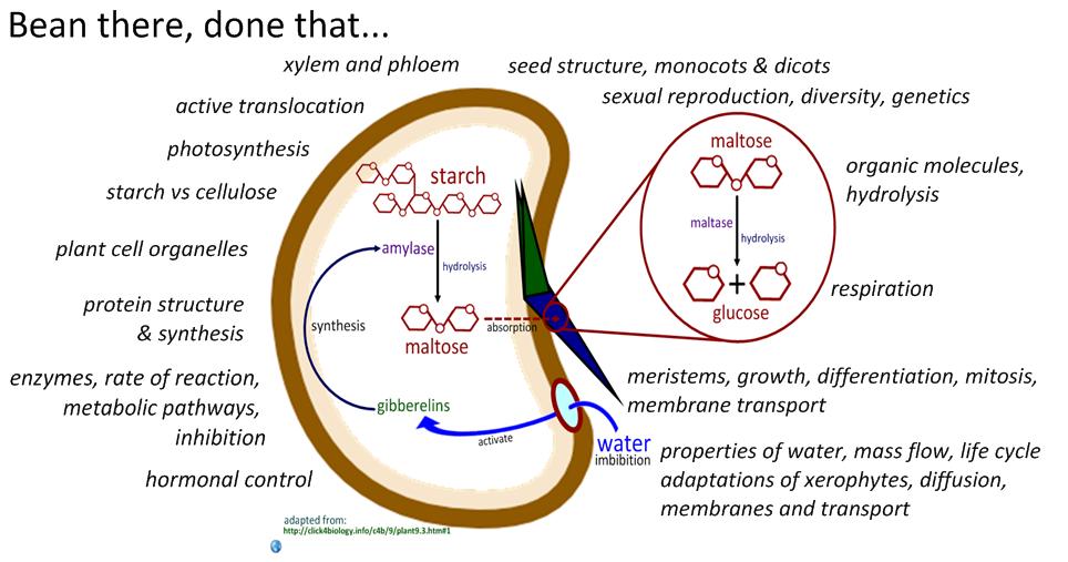 Plant Cell Diagram Gcse